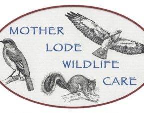 Mother Lode Wildlife Care
